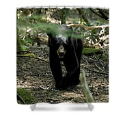 The Forest Bear Shower Curtain