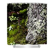 The Forest Floor Bluestone State Park West Virginia Shower Curtain