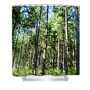 The Forest Shower Curtain