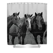 The Four Horses Shower Curtain