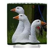 The Fowl Of Borst Park Wa Shower Curtain
