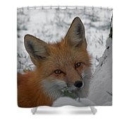 The Fox 4 Shower Curtain