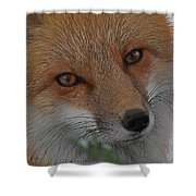 The Fox 4 Upclose Shower Curtain
