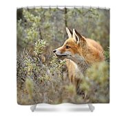 The Fox And Its Prey Shower Curtain