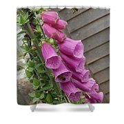 The Foxglove And The Bumble Bees Shower Curtain