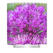 The Full Bloom Of Flowering Ornamental Onion Shower Curtain