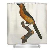 The Gag Aracari Shower Curtain