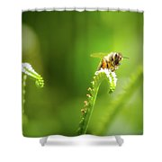 The Gatherer 2 Shower Curtain