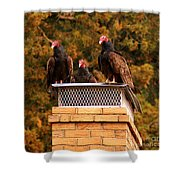 The Gathering Of Vultures Shower Curtain