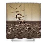 The Gathering - Sandhill Cranes Shower Curtain