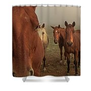 The Gauntlet - Horses Shower Curtain