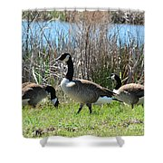 The Geese Are Back Shower Curtain