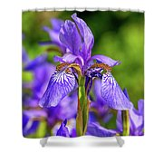 The Gentleness Of Spring 5 Shower Curtain