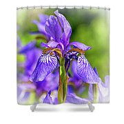 The Gentleness Of Spring 5 - Vignette Shower Curtain