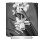 The Gentleness Of Spring Bw Shower Curtain