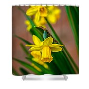 The Gentleness Of Spring Shower Curtain