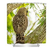 The Glance Shower Curtain