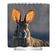 Golden Ears Bunny Shower Curtain