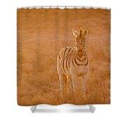 The Golden Zebra Shower Curtain