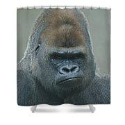 The Gorilla 4 Shower Curtain