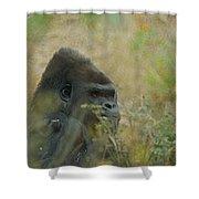 The Gorilla 5 Shower Curtain