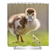 The Gosling And The Flower Shower Curtain