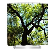 The Grace Of A Lonely Tree Shower Curtain