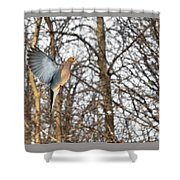 The Graceful Mourning Dove In-flight Shower Curtain