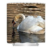 The Graceful Swan  Shower Curtain