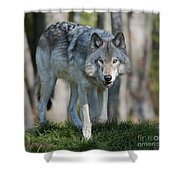 The Gray King... Shower Curtain