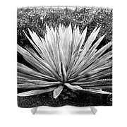 The Great Agave Shower Curtain