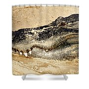 The Great Alligator Shower Curtain