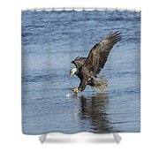 The Great American Bald Eagle 2016-8 Shower Curtain