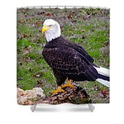 The Great Bald Eagle Shower Curtain