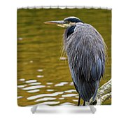 The Great Blue Heron Perched On A Tree Branch Shower Curtain