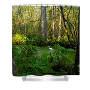 The Great Corkscrew Swamp Shower Curtain