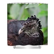The Great Curassow 3 Shower Curtain