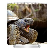 The Great Gopher Tortoise Shower Curtain