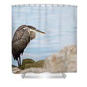 The Great Old Heron Shower Curtain