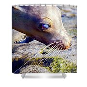 The Great Seal Shower Curtain