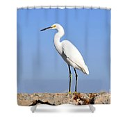 The Great Snowy Egret Shower Curtain