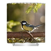 The Great Tit   Shower Curtain