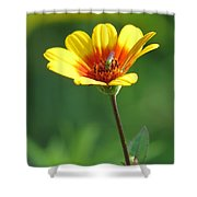 The Green Bug Shower Curtain