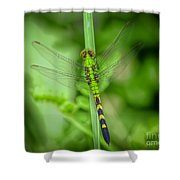 The Green Dragon Shower Curtain