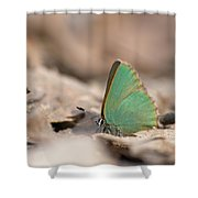 The Green Hairstreak Shower Curtain