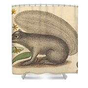 The Grey Fox Squirrel (sciurus Cinereus) Shower Curtain