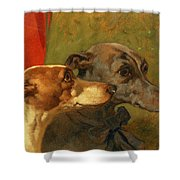 The Greyhounds Charley And Jimmy In An Interior Shower Curtain by John Frederick Herring Snr