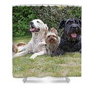 The Group Of Dogs Shower Curtain