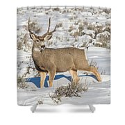 The Gtnp Mule Deer Buck Shower Curtain