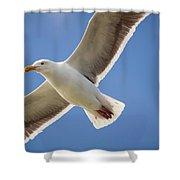The Gull Shower Curtain